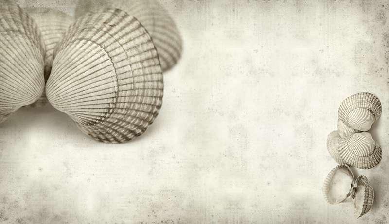Carta da parati Shells