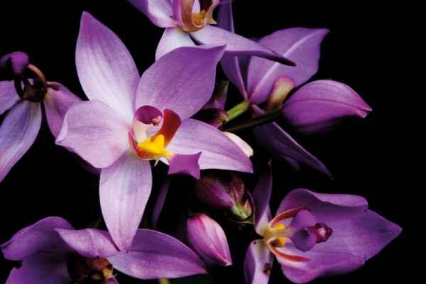 Carta da parati Orchidea 1