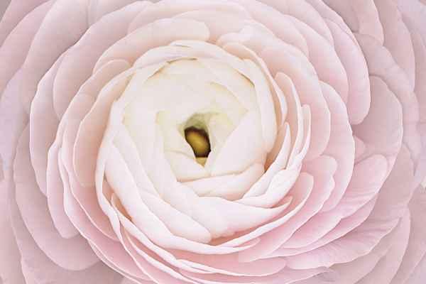 Carta da parati Rosa Macro Pink
