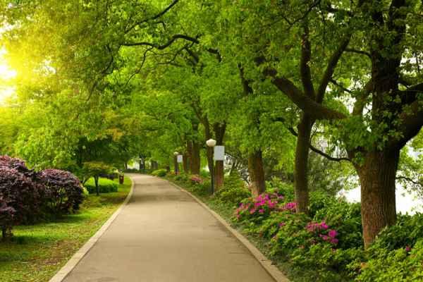 Carta da parati Viale nel parco