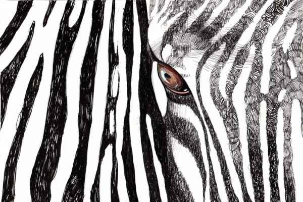 Carta da parati Zebra
