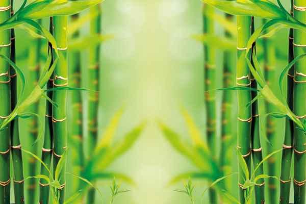 Carta da parati Bamboo Specchiato