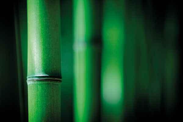 Carta da parati Bambou Zen