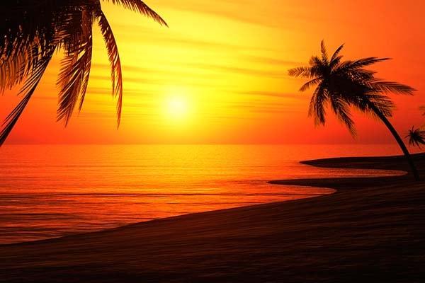 Carta da parati Tramonto spiaggia e palme