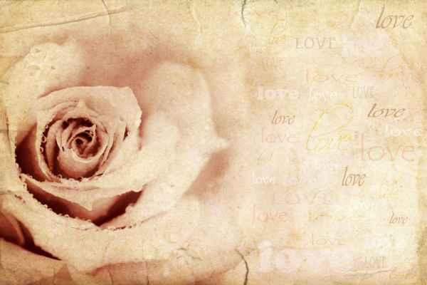 Carta da parati Rosa love