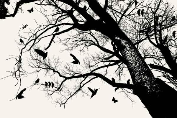 Carta da parati Albero e uccelli